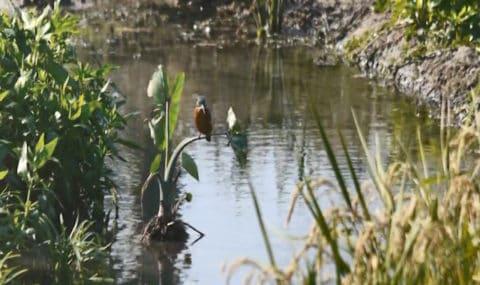 生態池裡的小鳥