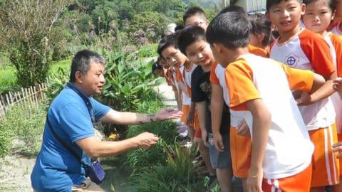 環境教育生態踏查